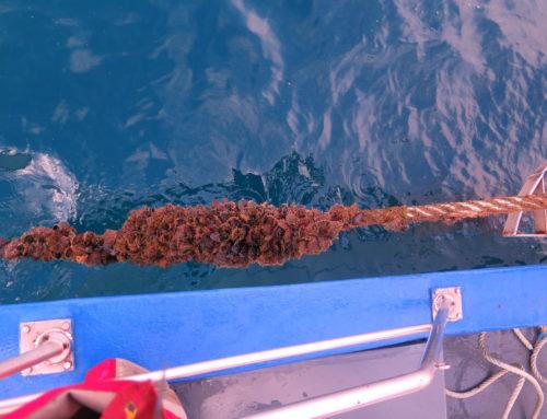 Last sampling of BLUENET  at sea